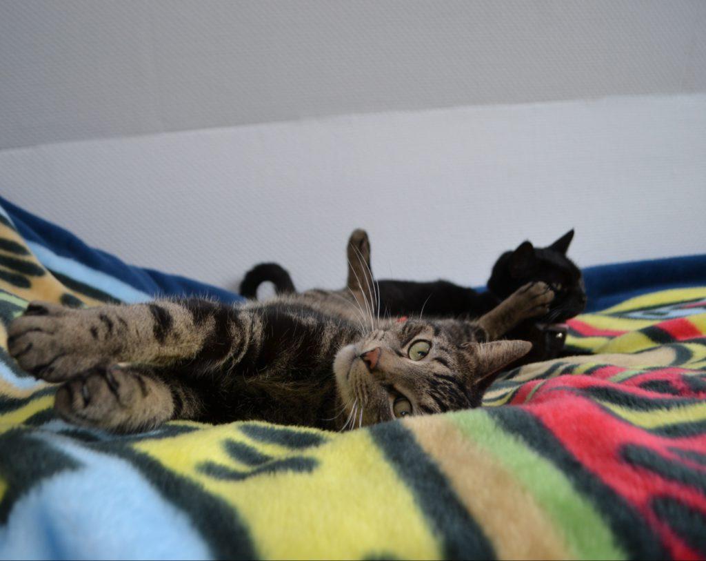 Tiger und Cleo