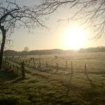 Pferde auf der Weide, die an unserem Gassiweg liegt