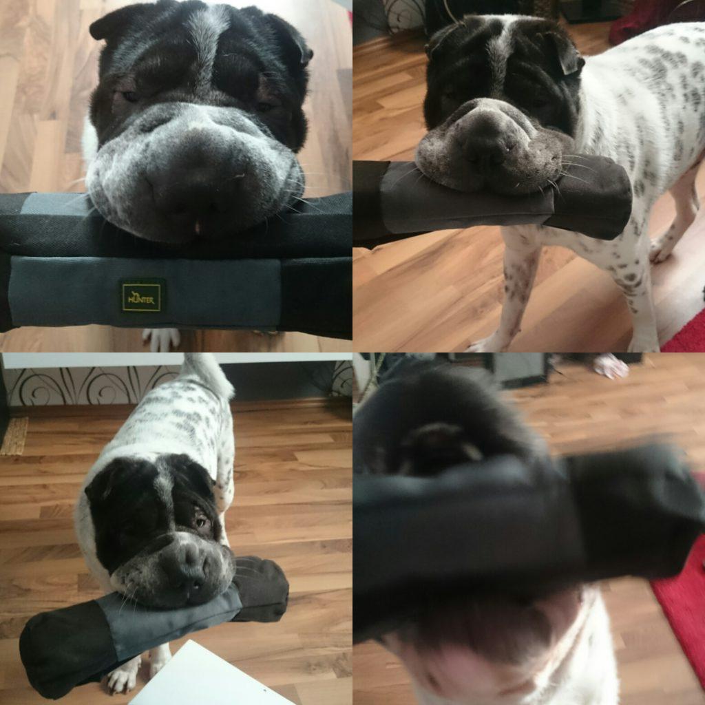Test Hunter Dummy XL Shar Pei Kingston Hund