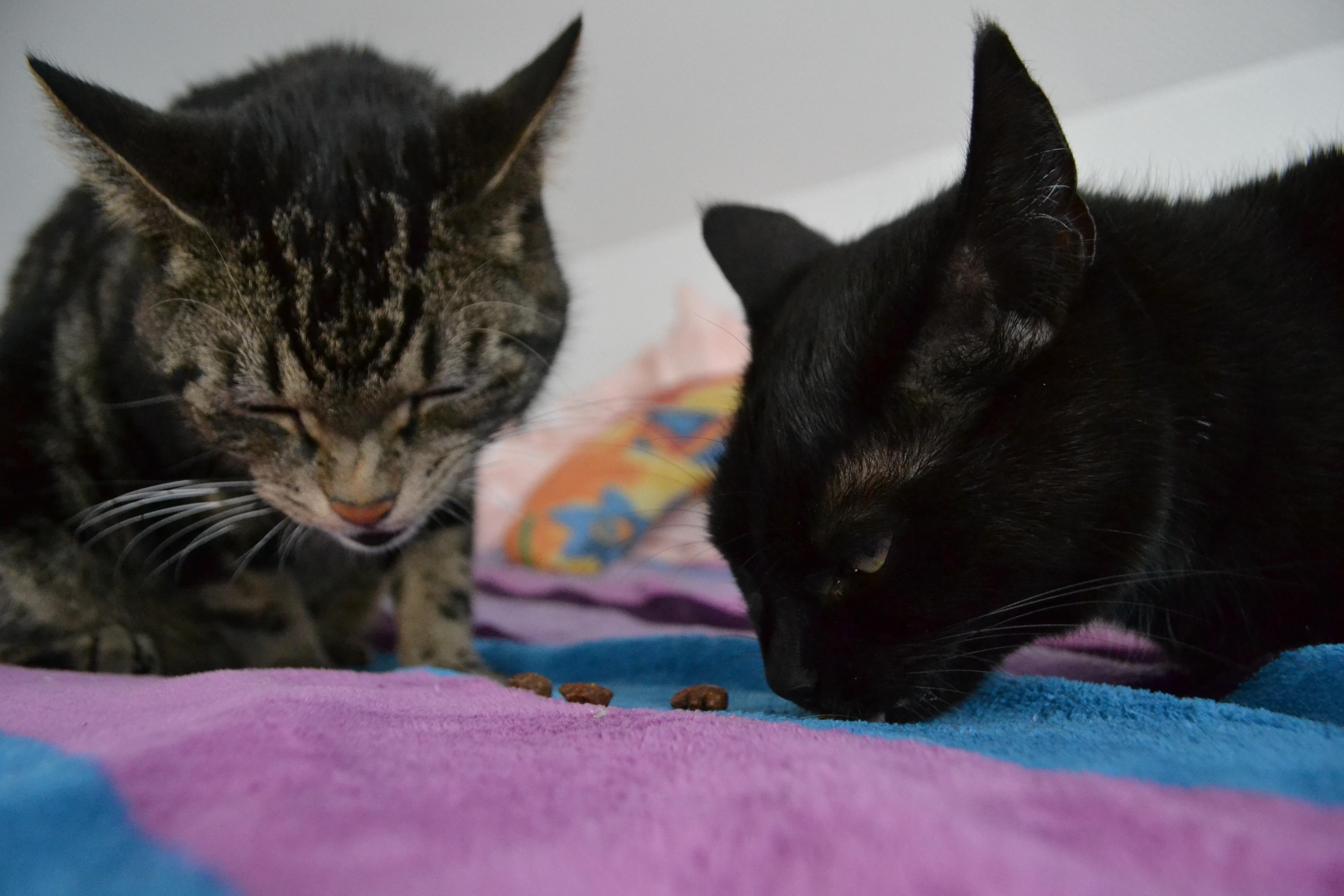 Tiger und Cleo beim Testen von Sanabelle Dentalsnack