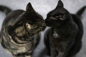 Yin Yang Katzenliebe Malous Rabaukenbande Tierheim Katzen Kater Katze Blog Geschwister Tiere Adoption Cleo Tiger Liebe Freundschaft