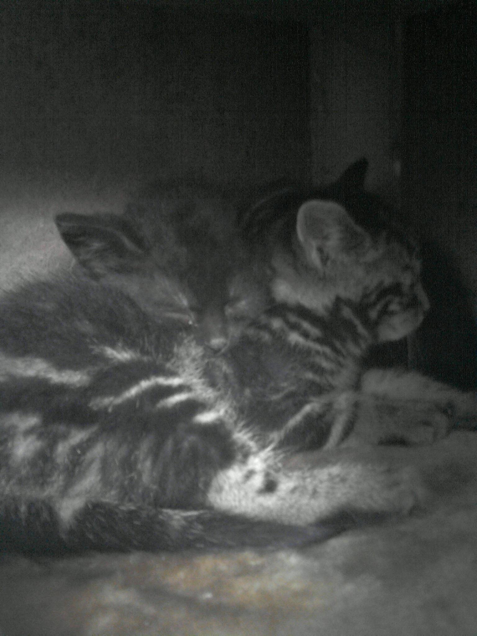 Katze Kater Adoption Tierheim Findelkinder Flaschenkinder Trauma