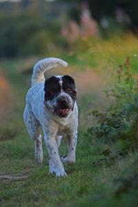 Tagebuch Hund Shar Pei Blogbeitrag Treffen Hundetreffen Freilauf Malous mannigfaltige Welt MMW