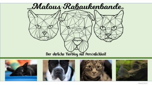 Portfolio Rabaukenbande Hund Katze Tier HUnde Katzen Blog Shar Pei Tests Insta Facebook Mediakit Portfolio Pinterest Youtube Snapchat