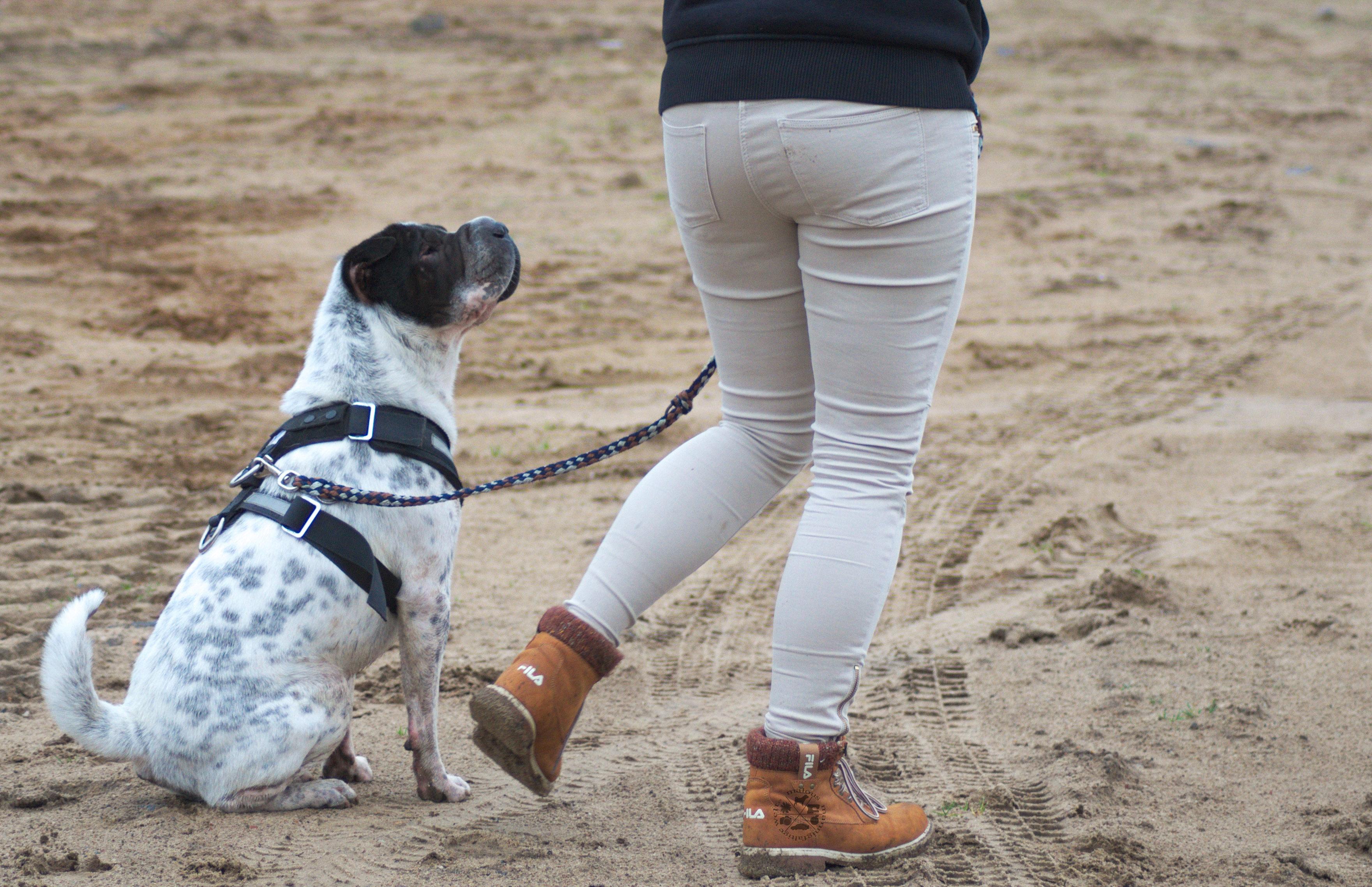 Kleinmetall Kingston Geschirr Shar Pei Hund Hunde Blog Hundeblog Test Produkttest Fafit Autogeschirr Sicherung TÜV Video MMW