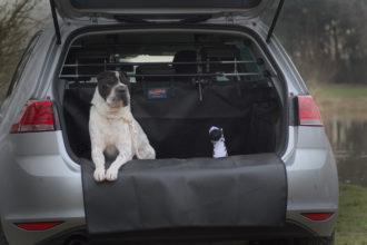 Test Hund Hundeblog Shar Pei Kingston Malous Rabaukenbande Tiere Tierblog Kofferraum lining Schmutz car Auto Golf VW
