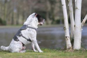 Birke Baum Celle Französischer Garten Kingston Hund Hundeblog Tagebuch Blog Shar Pei ehrlich Prönlichkeit Malous Rabaukenbande misstrauisch komisch ungeheuer Hundefotografie Fotografie Malou Blogfeature