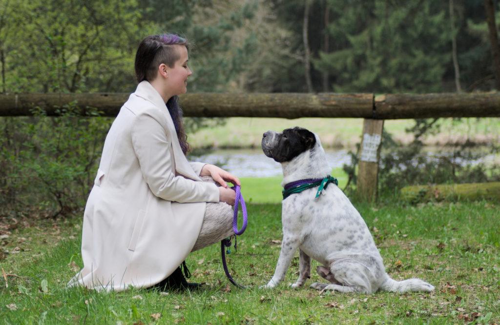 Dialog Kommunikation Shar Pei Hund Hundeblog Tierblog pet blog dog Kingston Malous Rabaukenbande Nein Ja Zuhören Reden Hören Sprache verbal körperlich Körpersprache