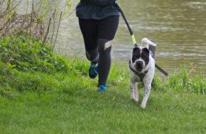 Joggen Sport Hund Hundeblog dog blog Tierblog Tiere laufen Aufbau Grundlage Aktivität draußen Auslastung Spaß Shar Pei Energie Malous Rabaukenbande Faulpelz aktiv gesund