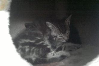 Katzen Katze Kater Blog Tierblog Tiere Malous Rabaukenbande Duo Mehrkatzen Haltung Anschaffung Adoption Kitten Babies schwarz weiß Handybild Projekt