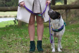 Kingston Beine Kleid D.Dogs 740 Frau Test Produkttest kostenlos Leine Halsband Meinung Fazit beste Kaufempfehlung Hundeblog Tierblog Blog Hund