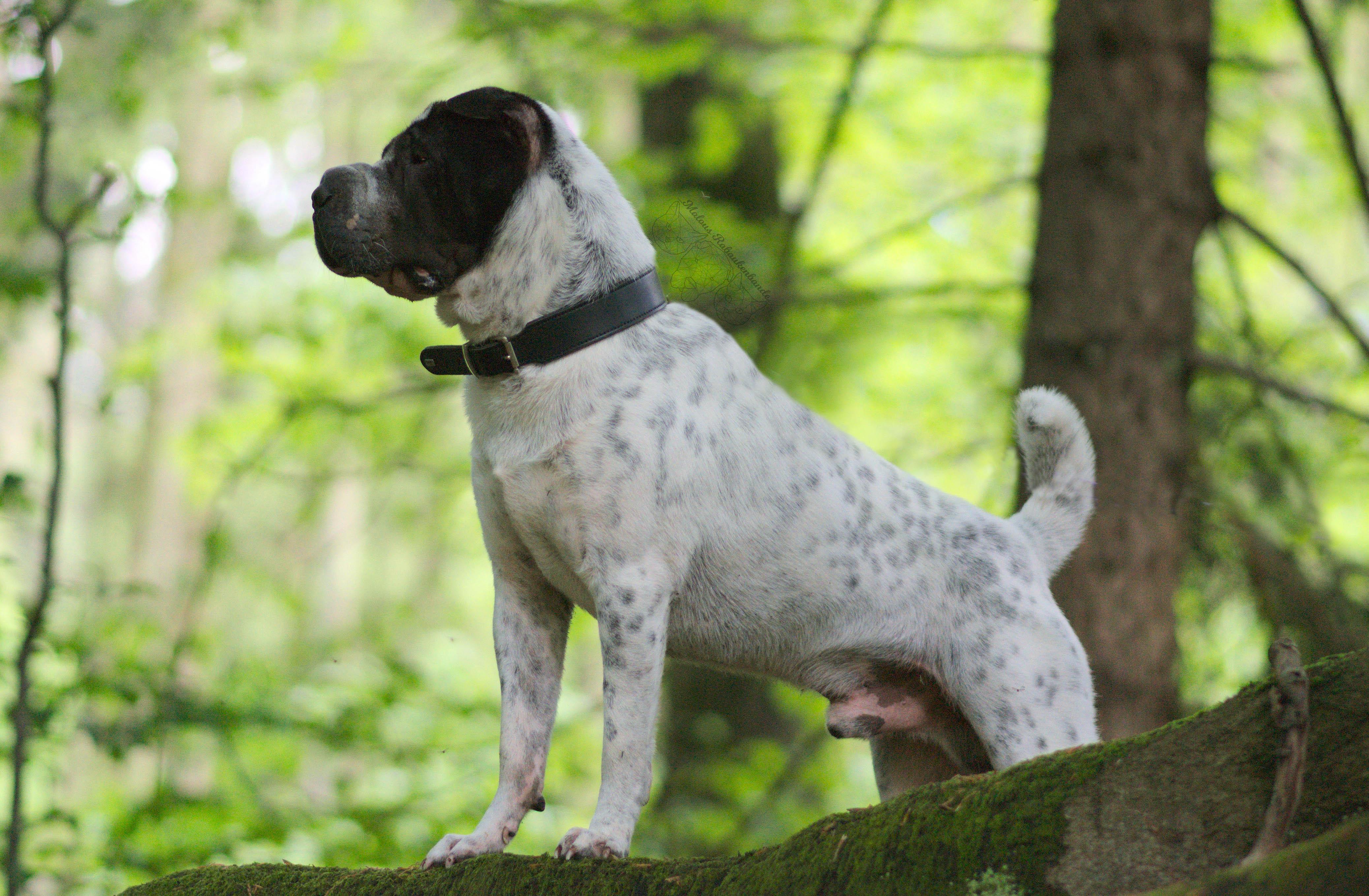 Wald Abenteuer Blog Hundeblog Hund Shar Pei Tagebuch Kingston Malous Rabaukenbande Blumen Arbeit Büro Spaziergang Hunde Tier Instagram Facebook Insekt Allergie Hannover Celle