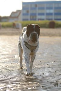 Kingston Cuxhaven Hunde Hund Strand blog Rabaukenbande Schloss Urlaub Meinung Fazit Bewertung Nordsee Shar Pei Teich Watt Meer Park Fotografie Hafen Alte Liebe Sahlenburg Familie (1)