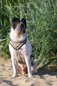 Kingston Cuxhaven Hunde Hund Strand blog Rabaukenbande Schloss Urlaub Meinung Fazit Bewertung Nordsee Shar Pei Teich Watt Meer Park Fotografie Hafen Alte Liebe Sahlenburg Familie (2)