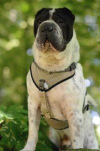 Kingston Cuxhaven Hunde Hund Strand blog Rabaukenbande Schloss Urlaub Meinung Fazit Bewertung Nordsee Shar Pei Teich Watt Meer Park Fotografie Hafen Alte Liebe Sahlenburg Familie