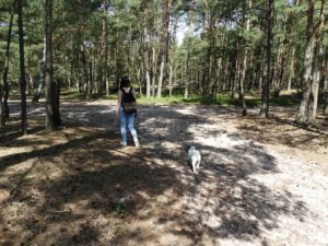 Rabaukenbande Hund Katze Hund Blog Kater Tier Tiere Erfahrung Urlaub Spiele Erziehung Training Shar Pei Futter Gesundheit dog welpe wald