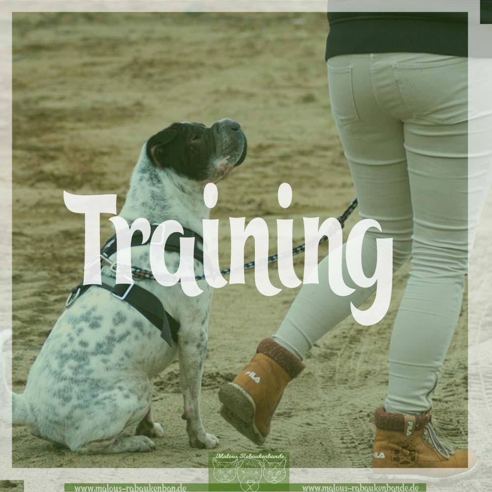 Hunde Katzen Tier Blog Kater Ruede Shar Pei Rabaukenbande Kategorien Uebersicht Training