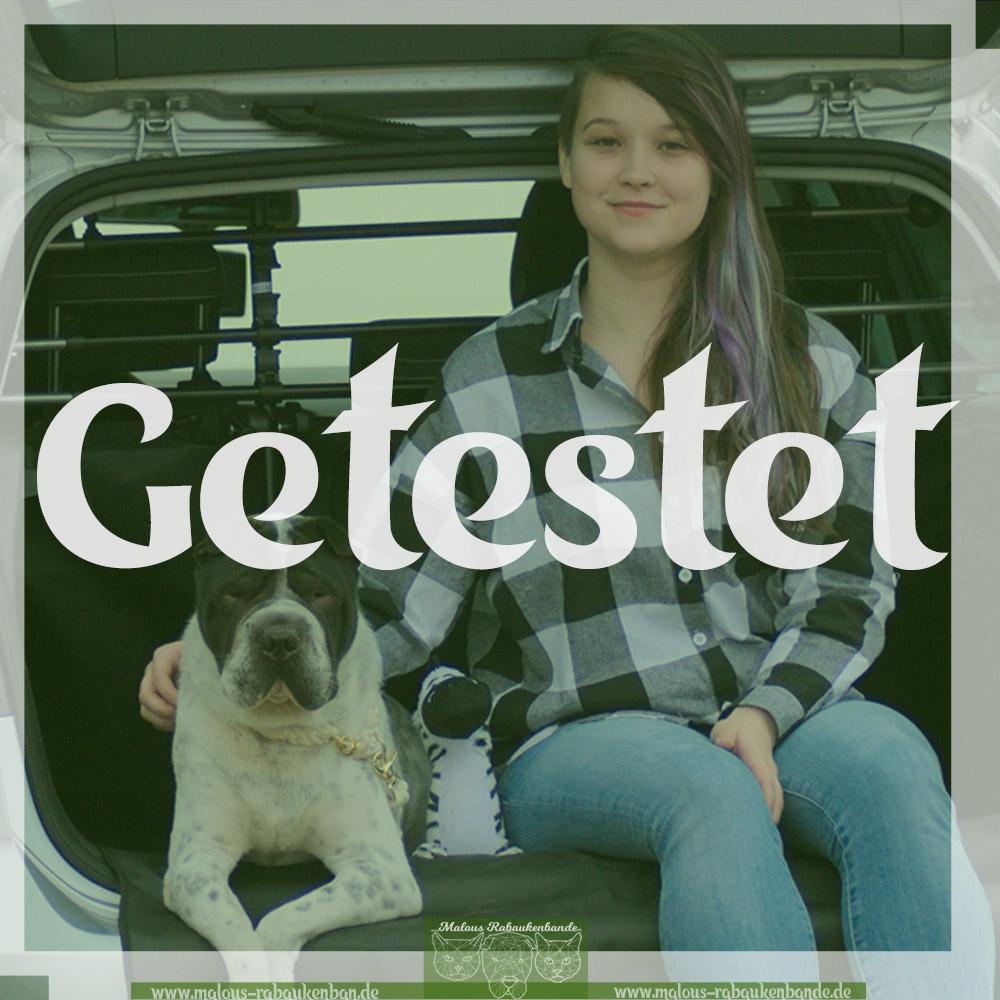 Hunde Katzen Tier Blog Kater Ruede Shar Pei Rabaukenbande Kategorien Uebersicht Tests