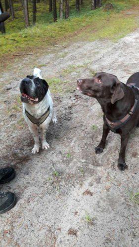 Rabaukenbande Hund Hundeblog Tierblog ehrlich pet dog blog Tagebuch Shar Pei Kingston Alltag Leben Fotografie Lächeln