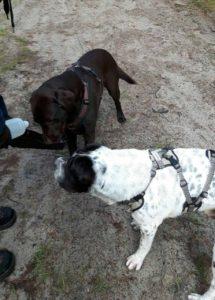 Rabaukenbande Hund Hundeblog Tierblog ehrlich pet dog blog Tagebuch Shar Pei Kingston Alltag Leben Fotografie Trinken