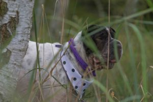 Rabaukenbande Hund Hundeblog Tierblog ehrlich pet dog blog Tagebuch Shar Pei Kingston Alltag Leben Fotografie Wald