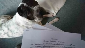 Rabaukenbande Hund Hundeblog Tierblog ehrlich pet dog blog Tagebuch Shar Pei Kingston Alltag Leben Fotografie blog
