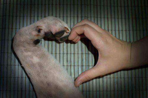 Rabaukenbande Hund Hundeblog Tierblog ehrlich pet dog blog Tagebuch Shar Pei Kingston Alltag Leben Fotografie herz