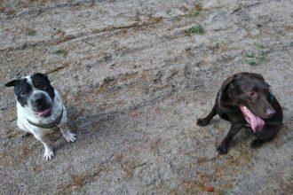 Rabaukenbande Hund Hundeblog Tierblog ehrlich pet dog blog Tagebuch Shar Pei Kingston Alltag Leben Fotografie labbi