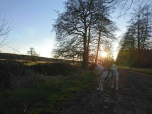 Rabaukenbande Hund Hundeblog Tierblog ehrlich pet dog blog Tagebuch Shar Pei Kingston Alltag Leben Fotografie labbi freilauf