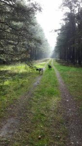 Rabaukenbande Hund Hundeblog Tierblog ehrlich pet dog blog Tagebuch Shar Pei Kingston Alltag Leben Fotografie labbi wald