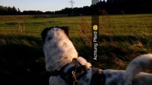 Rabaukenbande Hund Hundeblog Tierblog ehrlich pet dog blog Tagebuch Shar Pei Kingston Alltag Leben Fotografie reiter