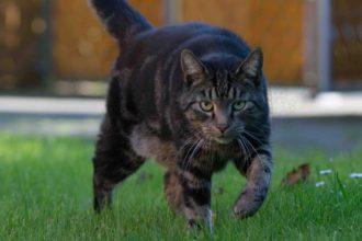 Tiger Rabaukenbande katze Kater Katzen blog Draußen Freigang drinnen Hauskatze Freiganger Dilemma Halter Liebhaber Tierheim adoptiert Sicherheit Freiheit