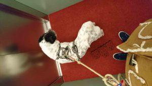 Hundeblog Reise Arbeit mit Hund Test Joggen Sport Gesundheit Reinigung Kater Beziehung Shar Pei Ruede Oktober