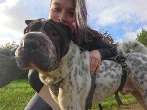 Hundeblog Reise Arbeit mit Hund Test Joggen Sport Gesundheit Reinigung Kater Beziehung Shar Pei Ruede 2