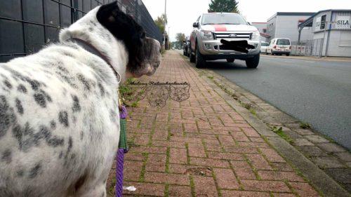 Hundeblog Reise Arbeit mit Hund Test Joggen Sport Gesundheit Reinigung Kater Beziehung Shar Pei Ruede Oktober 1