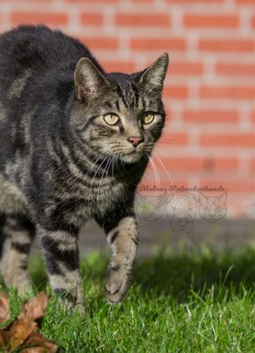 Rabaukenbande Hund Katze Kater Hundeblog Katzenblog Deutschland Zzusammenleben Tierblog Anleitung Tipps Vergesellschaftung Tiger