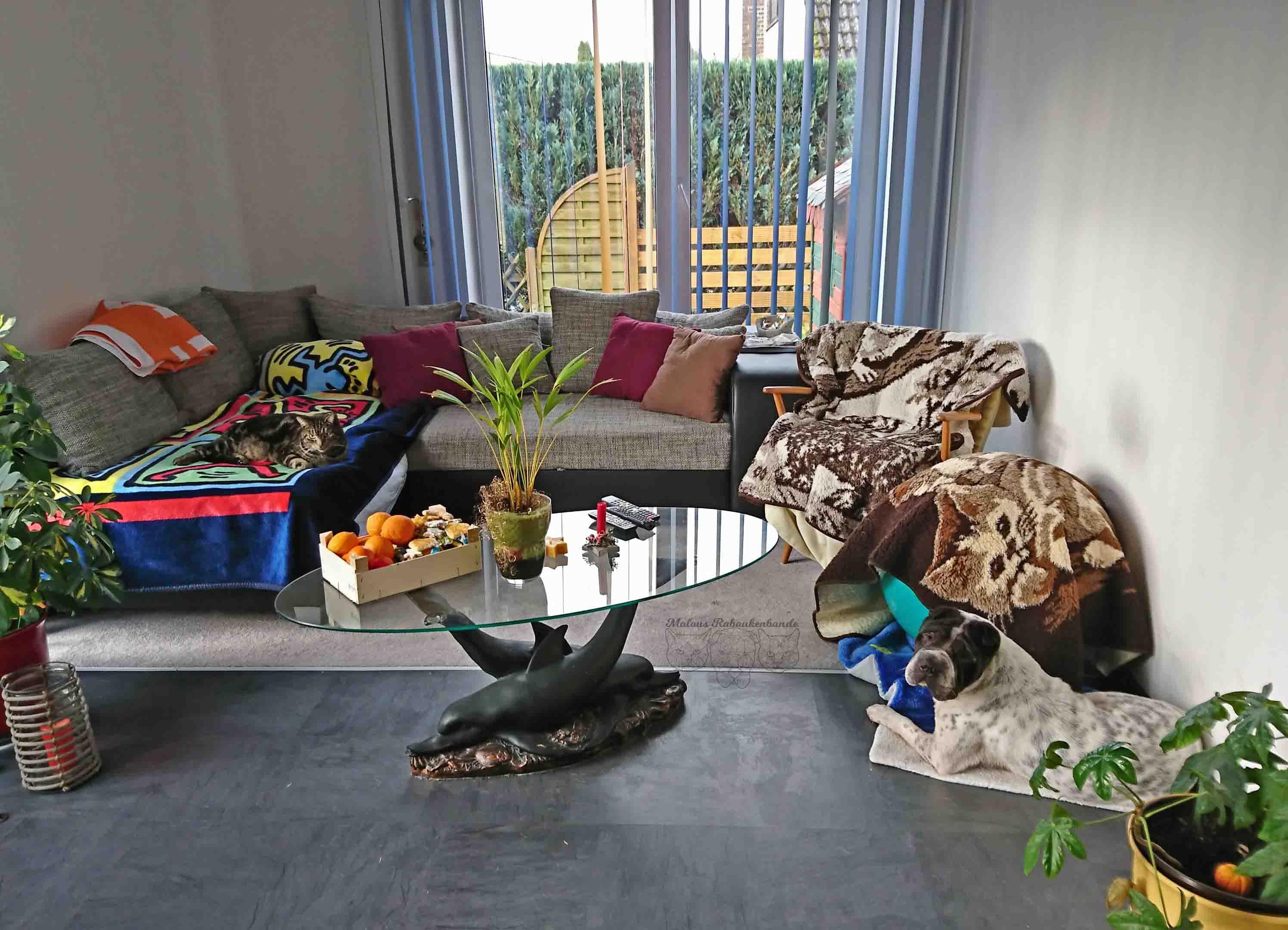 Dezember Tagebuch Hundeblog Hund Shar Pei Kingston Rabaukenbande Weihnachten Katze Kater Blog Freundschaft Vergesellschaftung