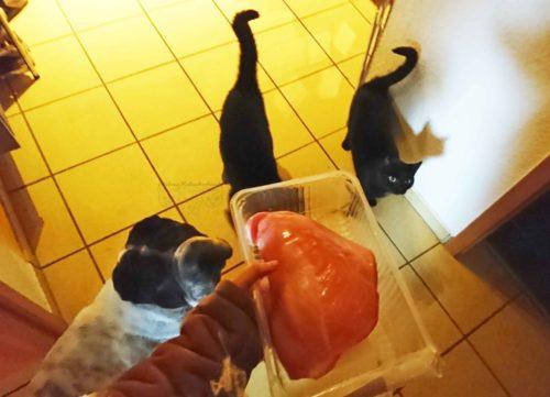 Dezember Tagebuch Hundeblog Hund Shar Pei Kingston Rabaukenbande Weihnachten Katze Kater Blog Futter Pute BARF roh