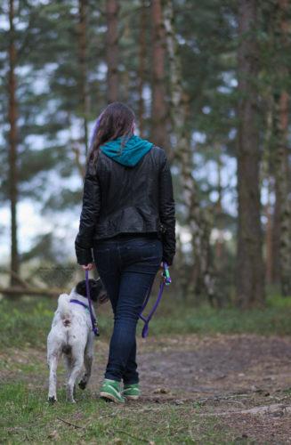 Gehorsam Rabaukenbande Hund Hundeblog Tierblog dog blog Katze Kater Buerohund Arbeit Reise Leine Hilfsmittel Erziehung Training Kleidung Gassi Spaziergang