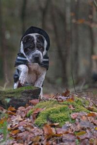 Hundeblog Reise Arbeit mit Hund Test Joggen Sport Gesundheit Labrador Kater Beziehung Shar Pei Ruede Schmutzig November Wald mL