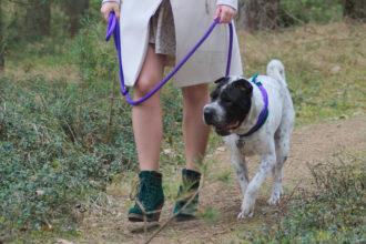 Rabaukenbande Hund Hundeblog Tierblog dog blog Katze Kater Buerohund Arbeit Reise Leine Hilfsmittel Erziehung Training Kleidung Spaziergang Gassi