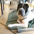 Rabaukenbande Hund Hundeblog Tierblog dog blog Katze Kater Buerohund Arbeit Reise unterwegs Buero Arbeiten Arbeitshund