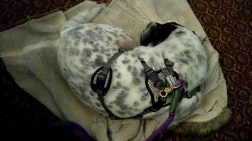 Rabaukenbande Hund Hundeblog Tierblog dog blog Katze Kater Buerohund Arbeit Reise unterwegs Buero Arbeitshund Jacke
