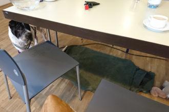 Rabaukenbande Hund Hundeblog Tierblog dog blog Katze Kater Buerohund Arbeit Reise unterwegs Buero Arbeitshund Praesentation