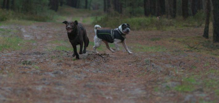 Hundeblog Reise Arbeit mit Hund Test Joggen Sport Gesundheit Labrador Kater Beziehung Shar Pei Ruede Vortrag November