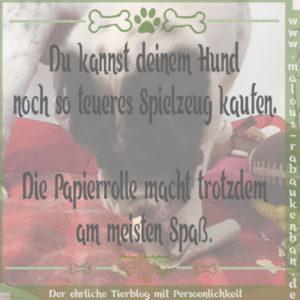 Feb18 Hund Kater Katze Hunde Tier Blog Tiere Shar Pei Malous Rabaukenbande Spruch Papierrolle Klorolle Spielzeug teuer guenstig Spaß