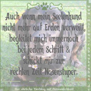 Feb18 Hund Kater Katze Hunde Tier Blog Tiere Shar Pei Malous Rabaukenbande Spruch Seelenhund Himmel Tod tot Begleitung Freundschaft
