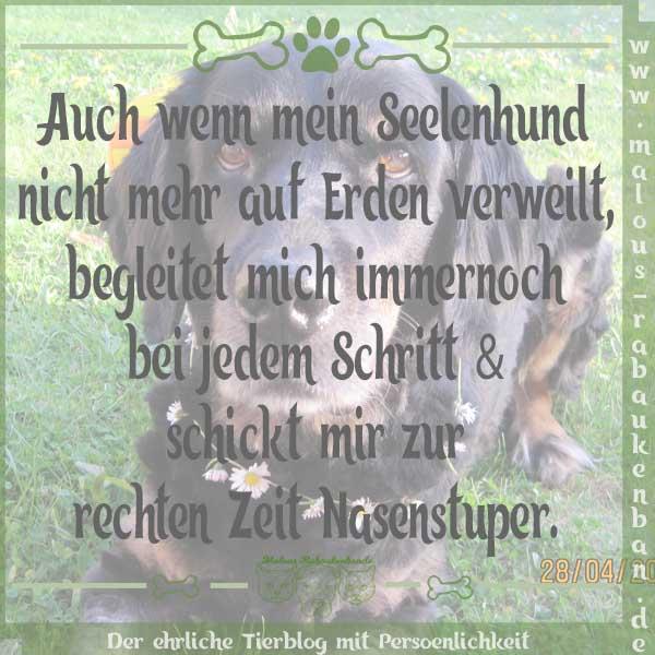 Am Besten Schone Spruche Hund Tot Zum Am Liebsten Spruche In Bildern