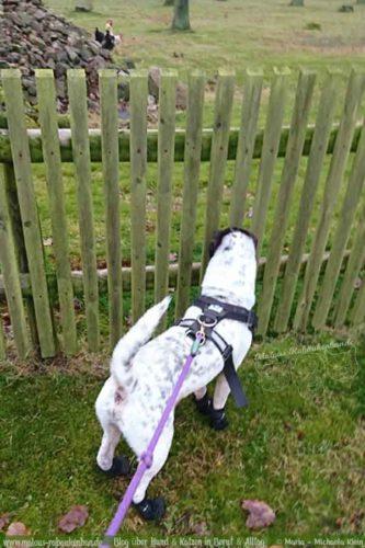 Hund Kater Katze Hunde Blog Shar Pei Ausflug Rabaukenbande Alltag Erziehung Arbeit Training Gehorsam Ausflug Winter Buero Gesundheit Jan18 mL
