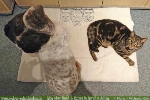 Hund Kater Katze Hunde Blog Shar Pei Rabaukenbande Alltag Erziehung Arbeit Training Gehorsam Ausflug Winter Buero Gesundheit Jan18 mL